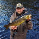 wild trout Ireland