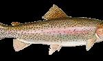 trout fishing Ireland